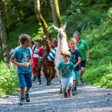 kids hiking with lamas | © Zell am See-Kaprun Tourismus