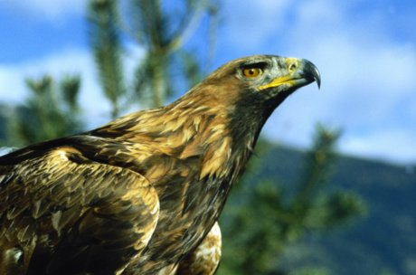 wildlife and eagle in the national park | © Nationalpark Hohe Tauern