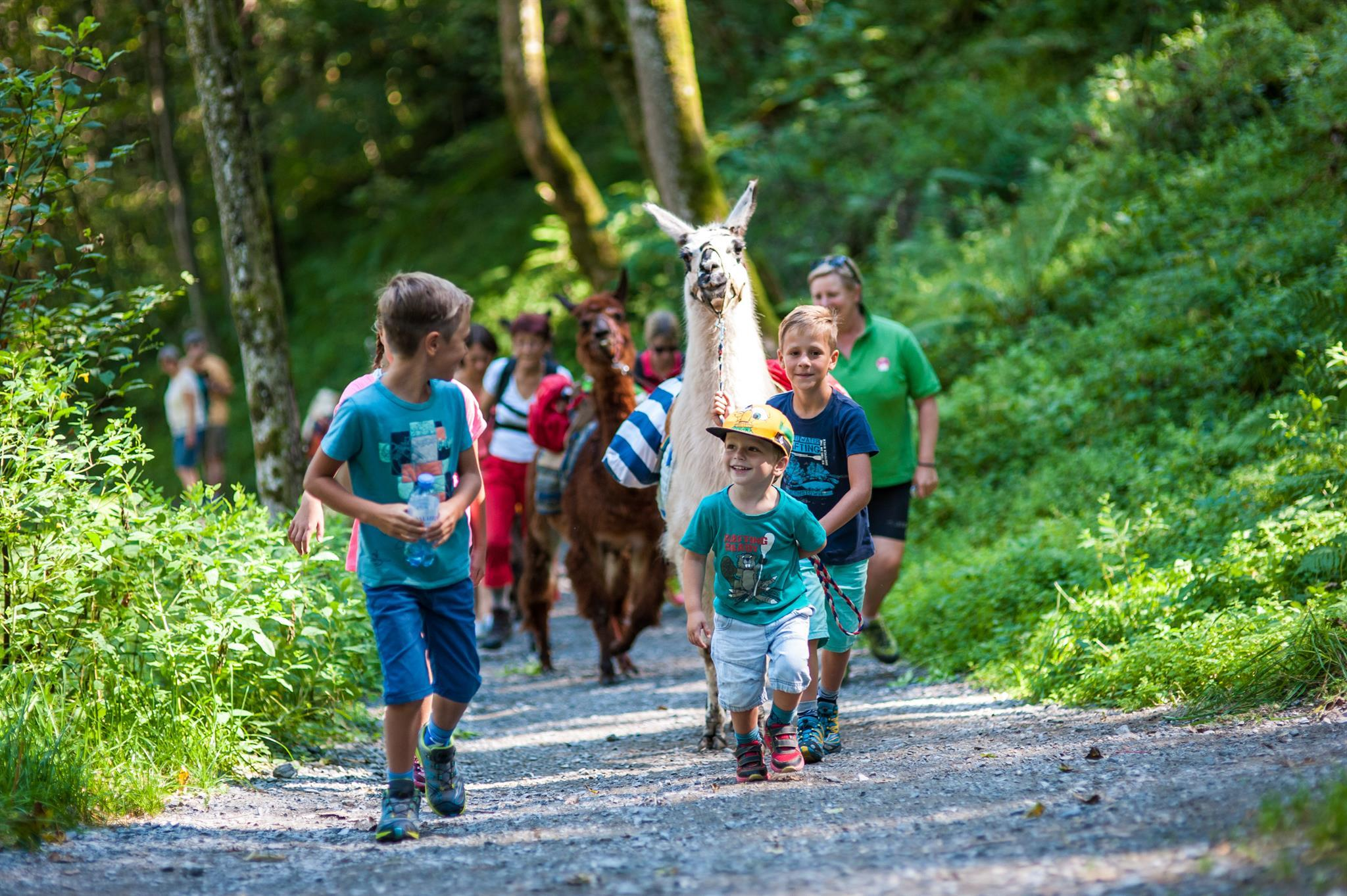 Children's programme: Family day: Trekking with Llamas & Alpacas