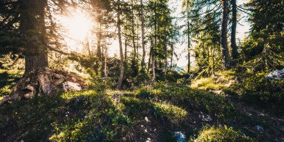 Hiking and enjoying the nature during your holiday in Austria | © Johannes Radlwimmer
